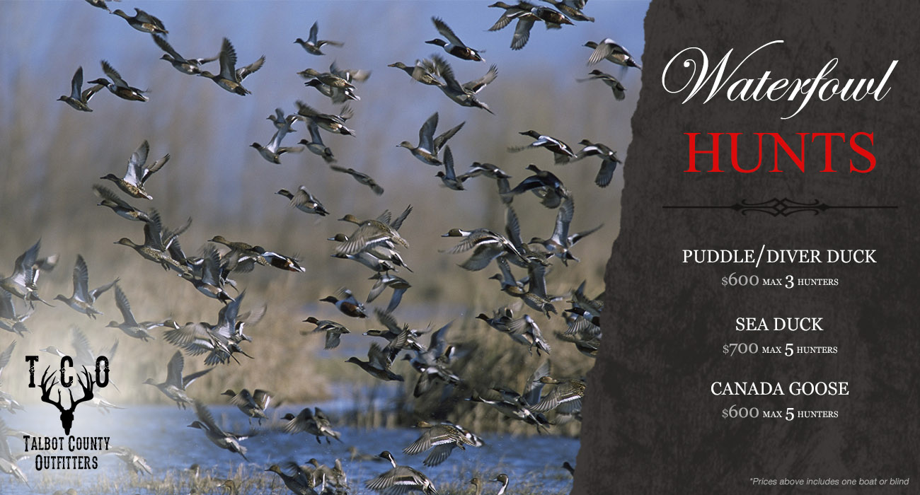 Waterfowl Seabird Hunting Maryland