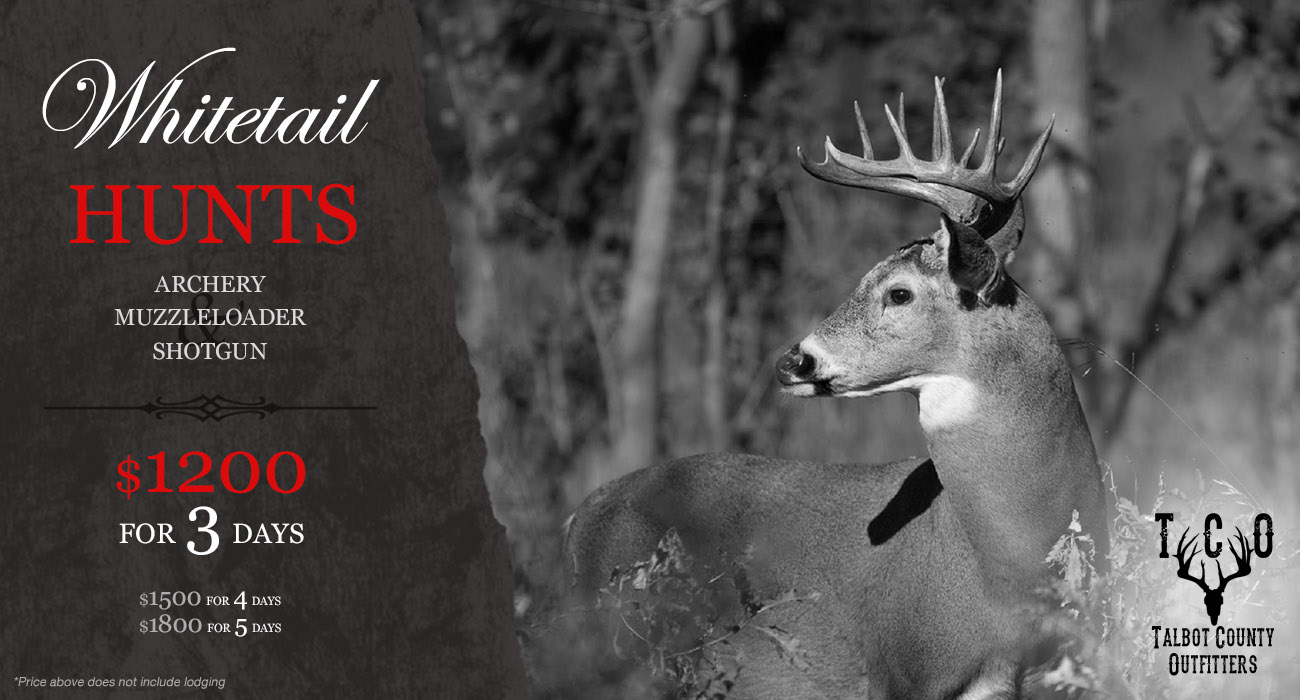 Whitetail Deer Hunting Maryland
